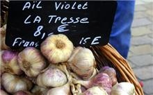 French garlic